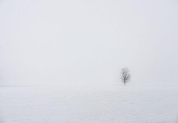 Brouillard d'hiver